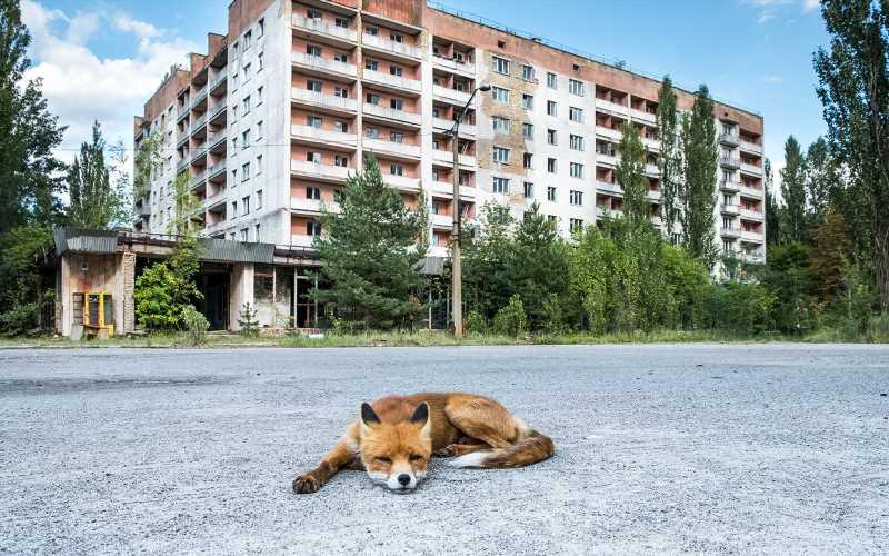 cernobil2.jpg