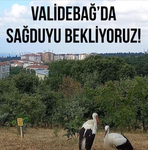 validebag-001.JPG