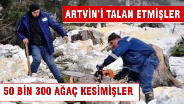 Artvin'de 50 bin 300 ağacın kesileceği ortaya çıktı